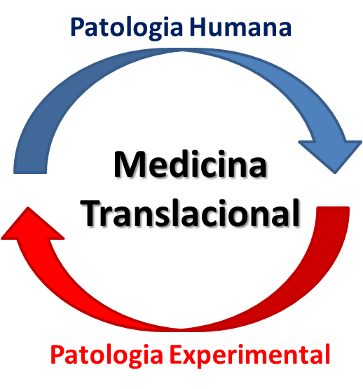 Fig.2PatologiaHumana Experimental